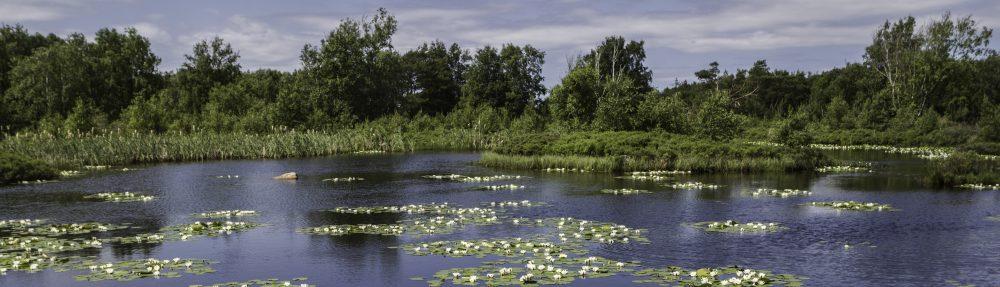 Hallands Botaniska Förening